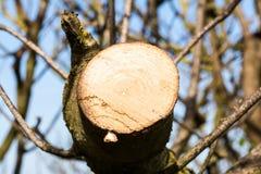Drzewo cutted gałąź obrazy royalty free