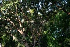 Drzewo, dżdżownicy ` s oka widok Obrazy Stock