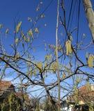 drzewo dekoracyjny Obrazy Stock