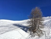 drzewo deskowy narciarski skłon Obrazy Royalty Free