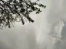 Drzewo deszcz opuszcza niebo połysk i promień obrazy stock