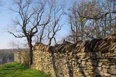 drzewo do ściany Zdjęcia Stock