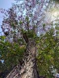 Drzewo, dolny widok obrazy stock