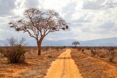 Drzewo drogą, czerwieni ziemia, wzgórza w daleko Zdjęcie Stock