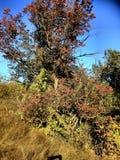 Drzewo droga opuszcza czerwonego koloryt zdjęcia stock