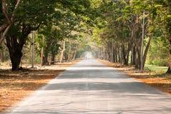 drzewo drogowy tunel fotografia stock