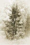 drzewo drzew iglastych royalty ilustracja