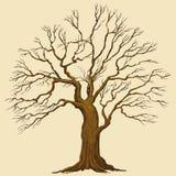 drzewo duży ilustracyjny wektor Obrazy Royalty Free
