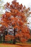 Drzewo faal Obrazy Stock