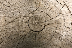drzewo fiszorka tło Zdjęcie Royalty Free