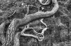 Drzewo formacja zdjęcia stock