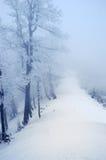 drzewo gór śnieżni drzewa Zdjęcia Royalty Free