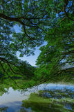 Drzewo górne gałąź Obraz Royalty Free