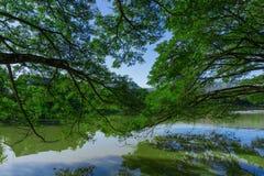 Drzewo górne gałąź Zdjęcia Royalty Free