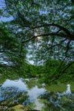 Drzewo górne gałąź Fotografia Stock