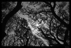 Drzewo gałąź sylwetka - Czarny I Biały zdjęcie stock