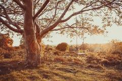 Drzewo huśtawka przy zmierzchem 3 obrazy royalty free
