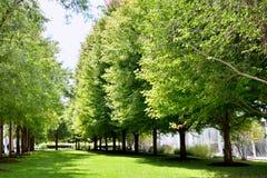 Drzewo i łąka Obraz Royalty Free