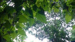 Drzewo i drzewo Obrazy Royalty Free