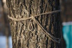 Drzewo i arkana Obraz Royalty Free