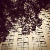 Drzewo i budynek Fotografia Royalty Free