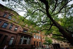 Drzewo i budynki wzdłuż Mount Vernon miejsca w Mount Vernon, półdupki Zdjęcie Royalty Free