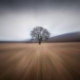 Drzewo i burza Zdjęcie Stock