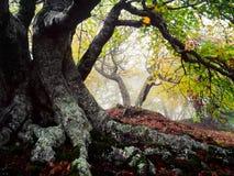 Drzewo i burza Zdjęcia Royalty Free