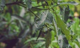 Drzewo i deszcz Obraz Stock