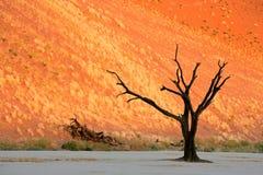 Drzewo i diuna zdjęcie royalty free