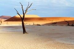 Drzewo i diuny w pustyni Zdjęcia Royalty Free