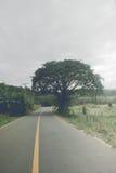 Drzewo i droga Zdjęcie Royalty Free