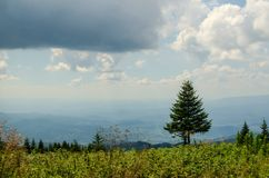 Drzewo i halny krajobraz obraz stock