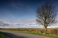 Drzewo i hedgerow Zdjęcie Stock