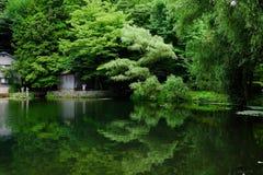 Drzewo i jezioro Obraz Royalty Free