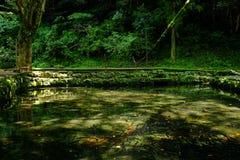 Drzewo i jezioro Zdjęcia Stock