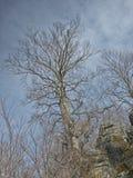 Drzewo i kamienie Fotografia Royalty Free