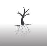 Drzewo i korzeń Obraz Stock