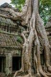 Drzewo i korzenie r na Angkor Wat ruinach Fotografia Stock