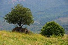 Drzewo i krzak Zdjęcia Stock