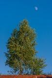 Drzewo i księżyc Fotografia Stock