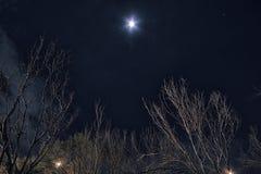 Drzewo i księżyc przy nocą Fotografia Royalty Free