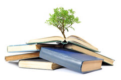 Drzewo i książki Obrazy Royalty Free