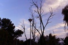 Drzewo i latarnia uliczna zdjęcia royalty free