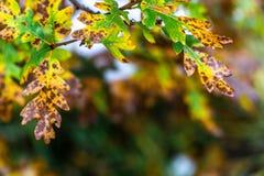 Drzewo i liście podczas spadek jesieni po deszczu zdjęcie royalty free