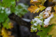 Drzewo i liście zakrywający w śniegu w zimie zdjęcie royalty free