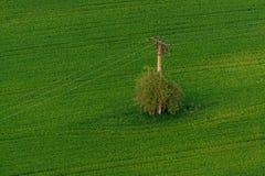 Drzewo i linia energetyczna Obraz Stock