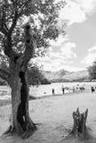 Drzewo i ludzie, Jeziorny Derwent wody brzeg, Cumbria, UK monochro Obraz Stock