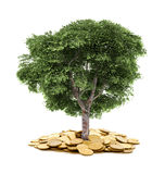Drzewo i monety, waluta, Obraz Royalty Free