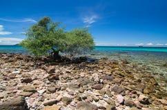 Drzewo i morze obrazy stock